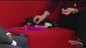 Sprout the kitten looking for a new home for the holidays