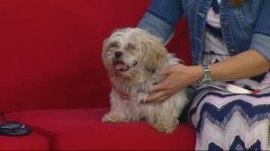 Saskatoon SPCA seeks home for Archie