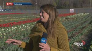 Global News Morning weather forecast: May 6, 2021 (01:31)