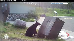 Waterton Lakes officials euthanize black bear that had excessive level of habituation (00:30)