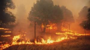 Ottawa to collaborate on B.C. wildfire crisis response (01:30)