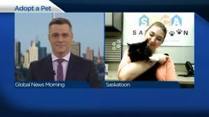 Adopt a Pet: Nero the cat (04:09)