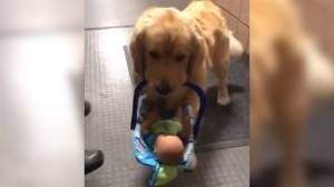 Police catch therapy dog 'stealing' donated Christmas toys