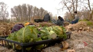 Project that grows food for struggling Calgarians hopes for support from new city council (01:31)