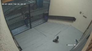 Caught on video: crime besieges Vancouver Buddhist temple