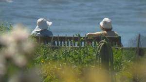 Experts urge caution as extreme heat warning issued for B.C. (02:09)
