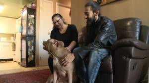Stolen dog reunited with Whitby family (01:42)