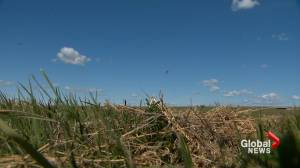 Drought outlook tool first of its kind in Canada to predict drought conditions 30 days in advance (01:35)