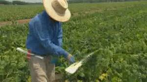 Growing COVID-19 outbreaks among migrant workers in Ontario
