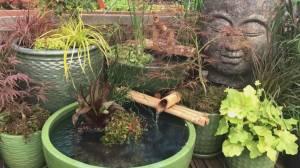 GardenWorks: Water Gardening