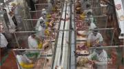 Play video: Coronavirus:  How the pandemic has changed the future of meat processing plants