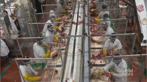 Coronavirus:  How the pandemic has changed the future of meat processing plants