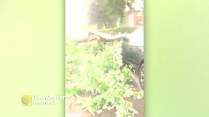 Tree crushes car amid severe storms in Quebec (00:37)