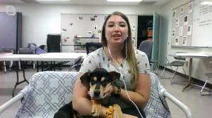 Adopt a Pet: Timber the puppy (03:42)