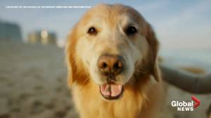 Dog owner thanks vets for saving his Scout's life with a $6M super bowl ad