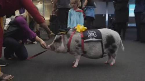 Airport therapy animals help reduce travel stress | Watch News Videos Online - Globalnews.ca