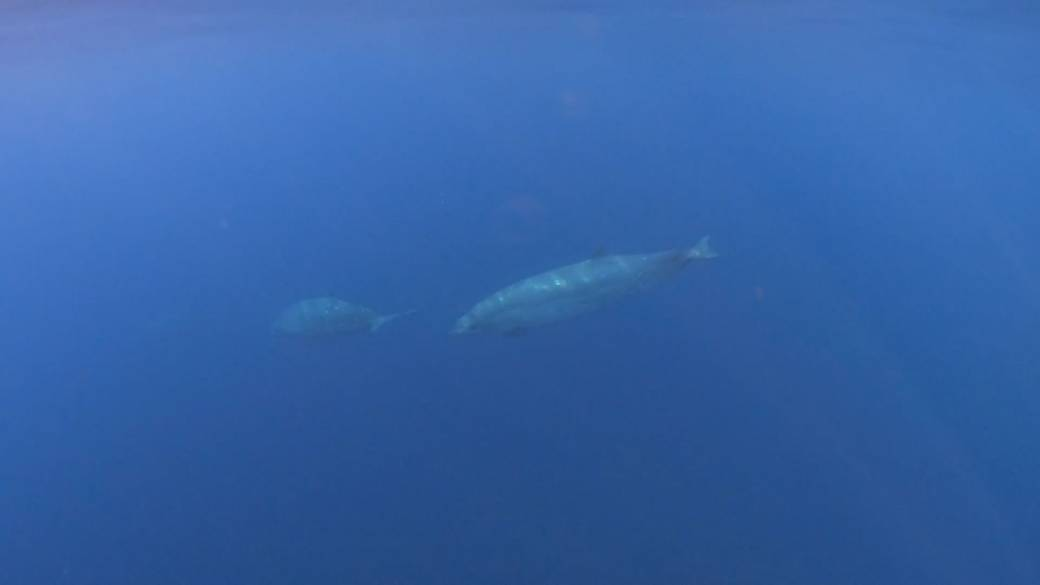 Scientists believe they have discovered a new whale species off Mexico's west coast   Globalnews.ca