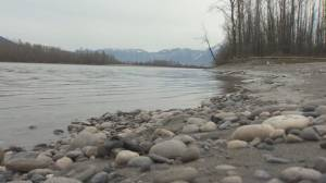New report says Fraser River is most endangered waterway in B.C.