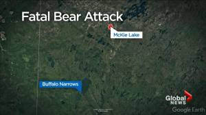 Woman killed in Sask.'s 1st fatal bear attack since 1983 (01:26)