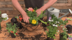 GardenWorks: Hanging baskets for summer