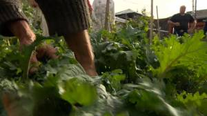 Gardeners in Saskatchewan growing more food in response to COVID-19 study