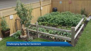 Hail and cold nights to blame for challenging spring for gardeners
