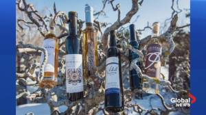 Icewine festival celebrates winter in wine country