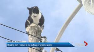 Cat gets rescued after being stuck on Toronto hydro pole for hours