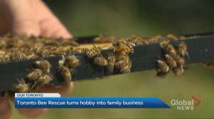 Turning a beehive hobby into a family business
