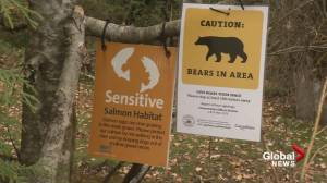 City of Coquitlam urges caution to bear-watchers (01:40)