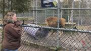 Play video: Cherry Brook Zoo completing process of rehoming its animals