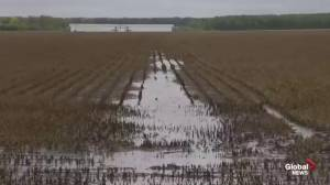 Soggy September affecting Manitoba farmers