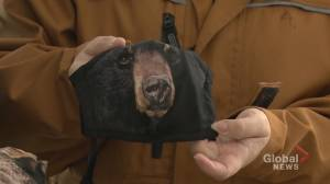 COVID-19: wildlife photographers create eye-catching animal masks to benefit rescue groups (01:43)