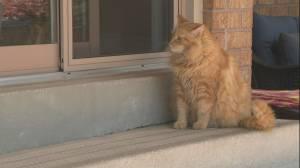 Police investigate cat killings in Vaughan