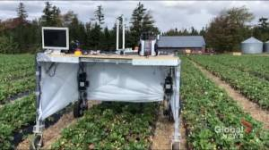 Dalhousie University's new robot created to ease stress in the agriculture industry (02:09)
