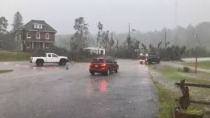 Ontario communities see downed trees, heavy rain as storm rolls through (01:37)
