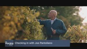 Checking in with Joe Pantoliano