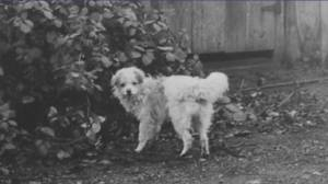 What happened to the Salish woolly dog? (05:14)