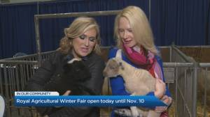 Royal Agricultural Winter Fair opens today