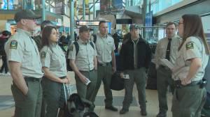 Seven Alberta firefighters deployed to Australia