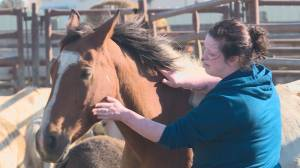 Horses seized in animal cruelty case go up for auction