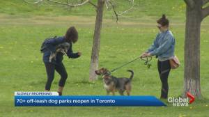 Toronto re-opens dog parks closed during coronavirus pandemic