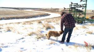 Testing phase underway to see how new land access app works in rural Sask.