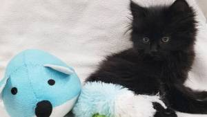 Kitten thrown from moving car in Kelowna (00:38)