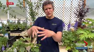 Protecting plants from this week's heat part of top tips to grow a great garden (04:29)
