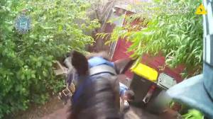 Police horse helps officers corner suspect in Perth, Australia (01:03)