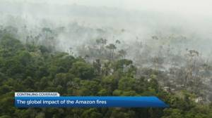 The global impact of the Amazon Fires