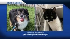 Global Peterborough's Shelter Pet Project for Aug. 13, 2021 (02:35)