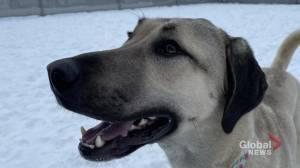 Edmonton Humane Society: Ryder the dog (03:54)
