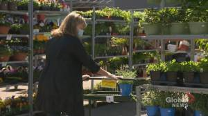 COVID-19 pandemic gets Calgary gardeners planting more veggies: 'Growing their own food'